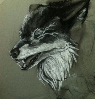 Blind Seer/Wolf Portrait - In Progress Commission, White and Black Charcoal on Paper